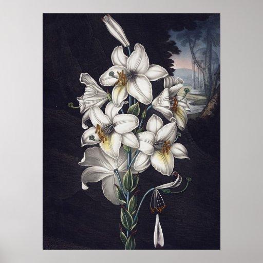 RJ Thornton - The White Lily Poster