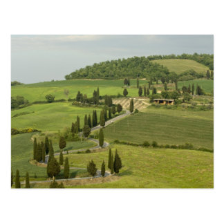 Road from Pienza to Montepulciano Post Cards