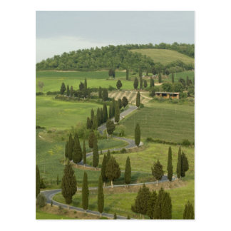Road from Pienza to Montepulciano, Postcard