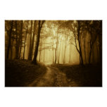 Road in a dark forest with fog