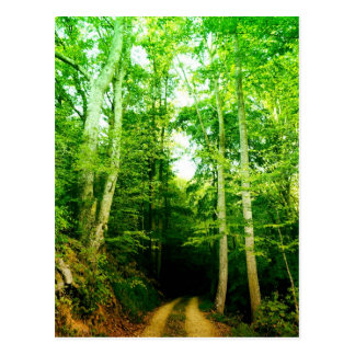 Road in the Woods Post Card