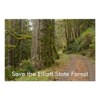 Road Old Growth Tree Save the Elliott State Forest Poster