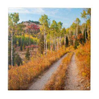 Road Through Autumn Colors Tile