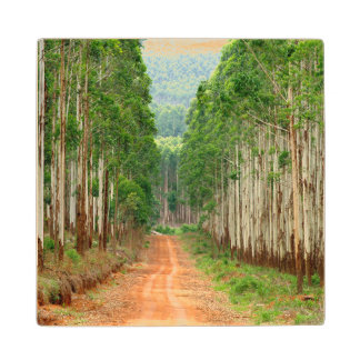 Road Through Eucalyptus Plantation Maple Wood Coaster