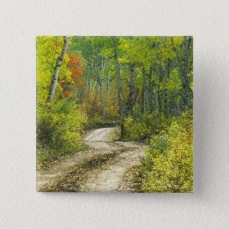 Road with autumn colors and aspens in Kebler 15 Cm Square Badge