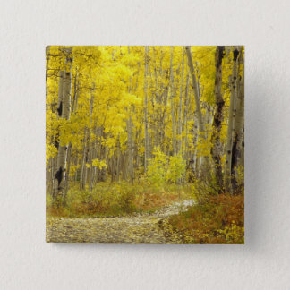 Road with autumn colors and aspens in Kebler 2 15 Cm Square Badge