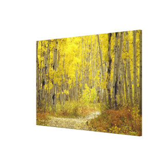 Road with autumn colors and aspens in Kebler 2 Canvas Print
