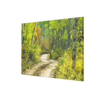 Road with autumn colors and aspens in Kebler Canvas Print