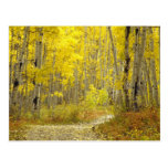 Road with autumn colours and aspens in Kebler 2 Postcards