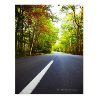 Road with Trees in Acadia National Park Postcard