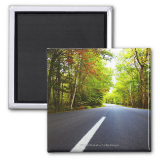 Road with Trees in Acadia National Park Square Magnet