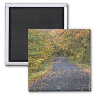 Roadside fall foliage, Southern Vermont, USA Square Magnet