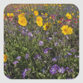 Roadside wildflowers in Texas, spring 2 Square Sticker