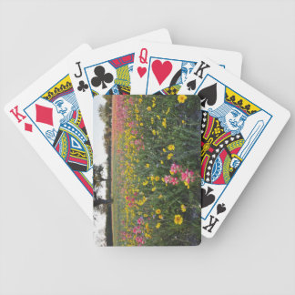 Roadside wildflowers in Texas, spring 3 Bicycle Playing Cards