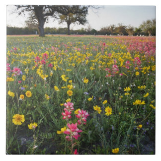Roadside wildflowers in Texas, spring 3 Tile