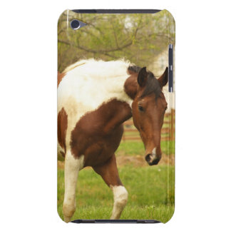 Roaming Paint Horse iTouch Case iPod Case-Mate Case