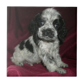 roan american cocker spaniel puppy, Apollo Small Square Tile