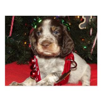 Roan English Springer Spaniel Christmas Puppy Postcard