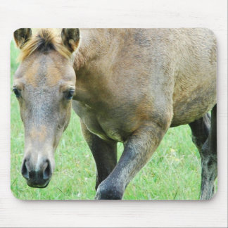 Roan Horse Photo Mouse Pad