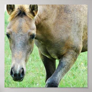 Roan Horse Print