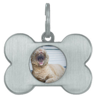 Roar like a Cat Pet Name Tag