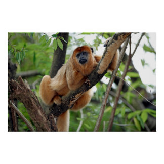 Roaring ape, clip tail ape, on tree, posters