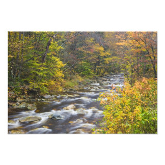 Roaring Brook in fall in Vermont's Green 2 Photo Print