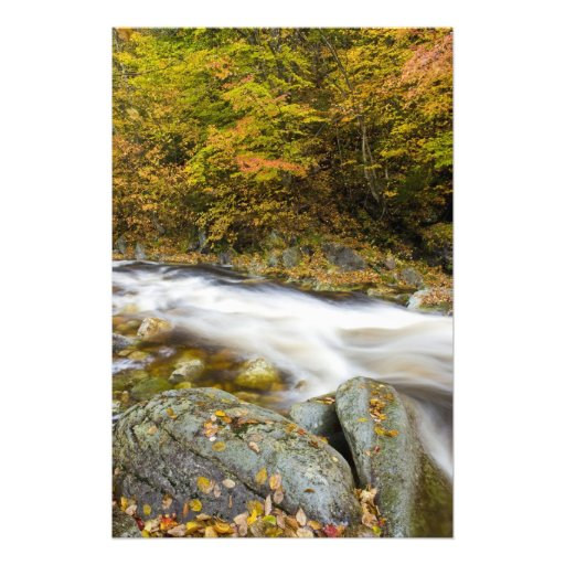 Roaring Brook in fall in Vermont's Green Photo Print