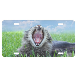Roaring kitty cat license plate