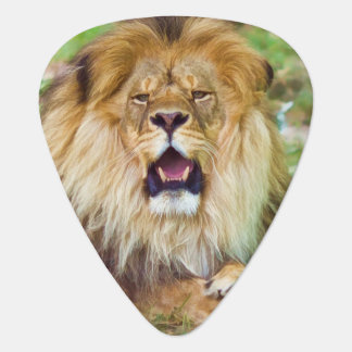 Roaring Lion Guitar Pick