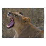 Roaring Lion notecard Card