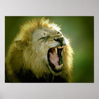 Roaring Lion Poster Print