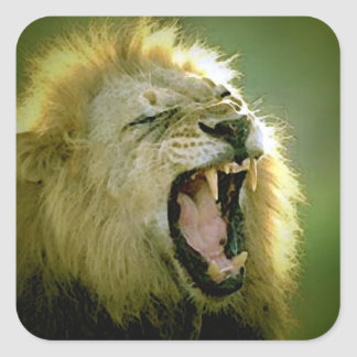 Roaring Lion Square Sticker