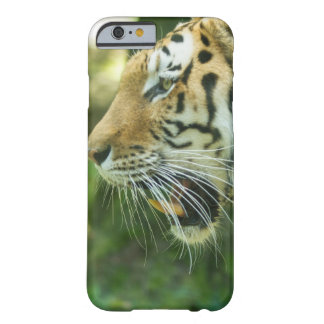 Roaring Tiger Barely There iPhone 6 Case