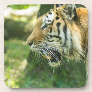 Roaring Tiger Drink Coasters