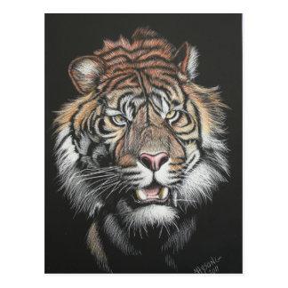 Roaring Tiger in Scratch Board Postcard