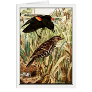 Robert Bruce Horsfall - Red-Winged Blackbird Card