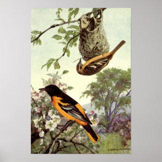 Robert Bruce Horsfall - Vintage Baltimore Oriole Poster