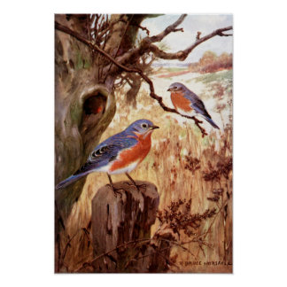 Robert Bruce Horsfall - Vintage Bluebird Poster