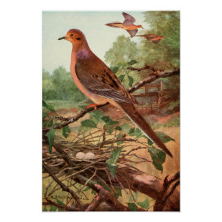 Robert Bruce Horsfall - Vintage Mourning Dove Poster