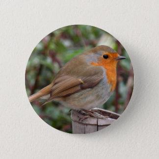 Robin 6 Cm Round Badge