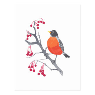 Robin and Berries Postcard