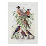 Robin and Bluebird Poster