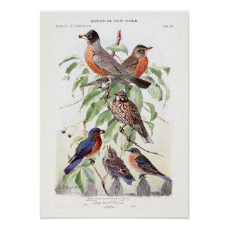 Robin and Bluebird Poster