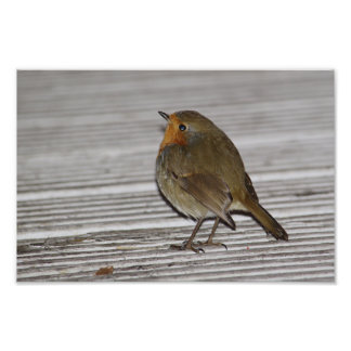 Robin At Deli Door Photo Print