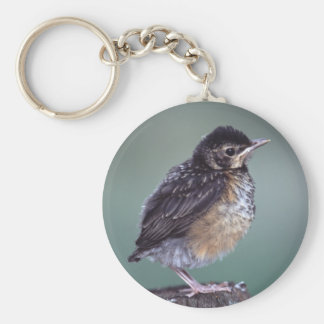 robin basic round button key ring