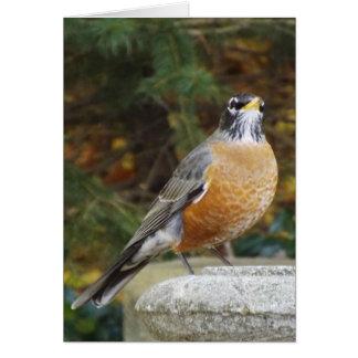 Robin bird bath card
