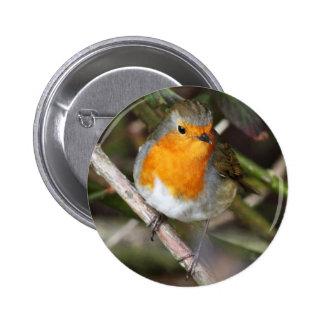 Robin Bird In Tree 6 Cm Round Badge