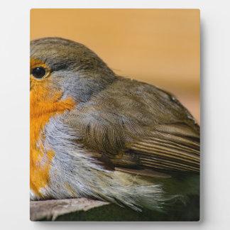 Robin bird on fence. plaque