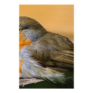 Robin bird on fence. stationery